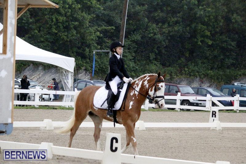 equestrian-6mar2015-1