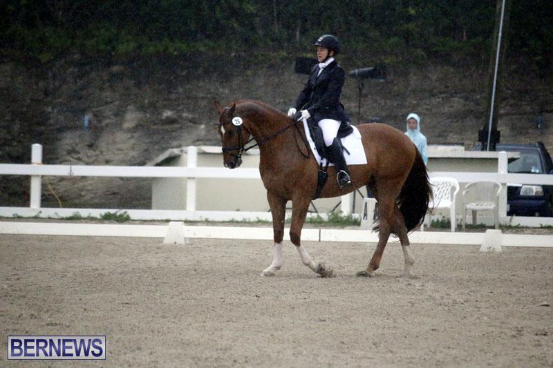 equestrian-6mar2015-15