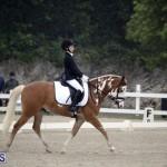equestrian 6mar2015 (2)