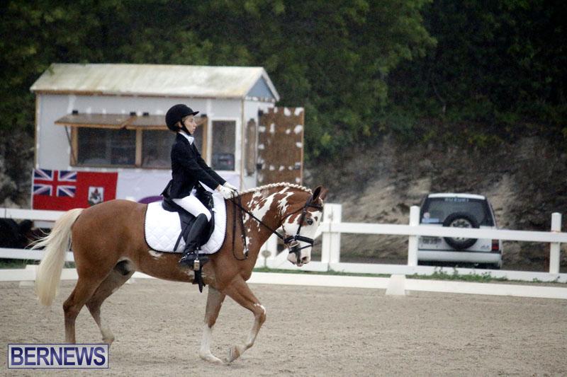 equestrian-6mar2015-4