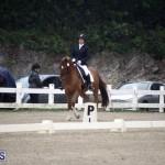 equestrian 6mar2015 (6)