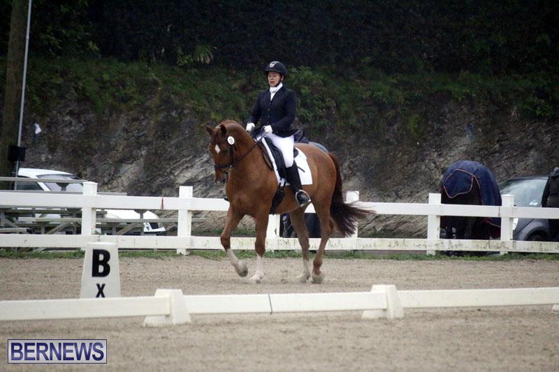 equestrian-6mar2015-7