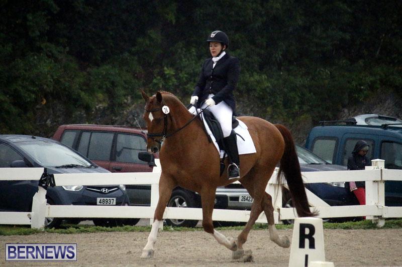 equestrian-6mar2015-8
