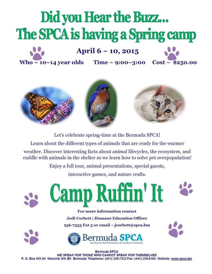 SPCA To Host Spring Camp For 10-14 Year Olds - Bernews