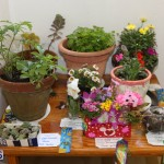 Little Learners AG Show 2015 (19)
