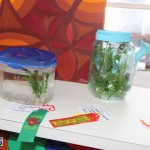 Little Learners AG Show 2015 (7)