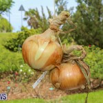 Onion Day St David's Bermuda, May 23 2015-14