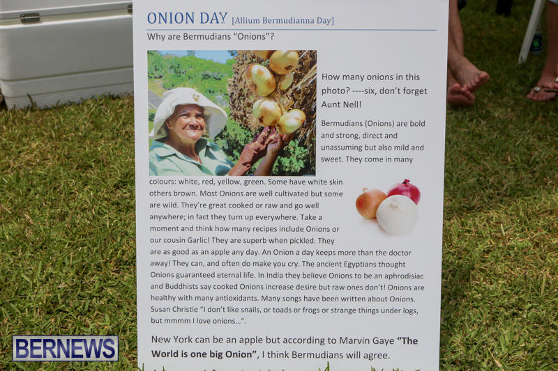 Onion-Day-St-Davids-Bermuda-May-23-2015-27