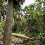 Trunk Island Bermuda, June 16 2015-10