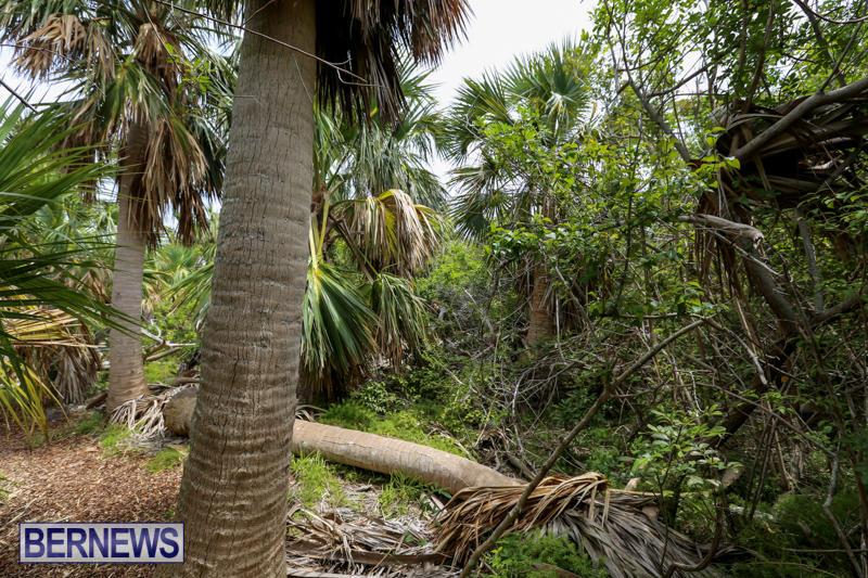 Trunk-Island-Bermuda-June-16-2015-10
