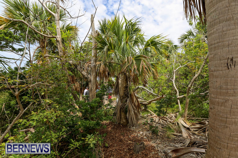 Trunk-Island-Bermuda-June-16-2015-11