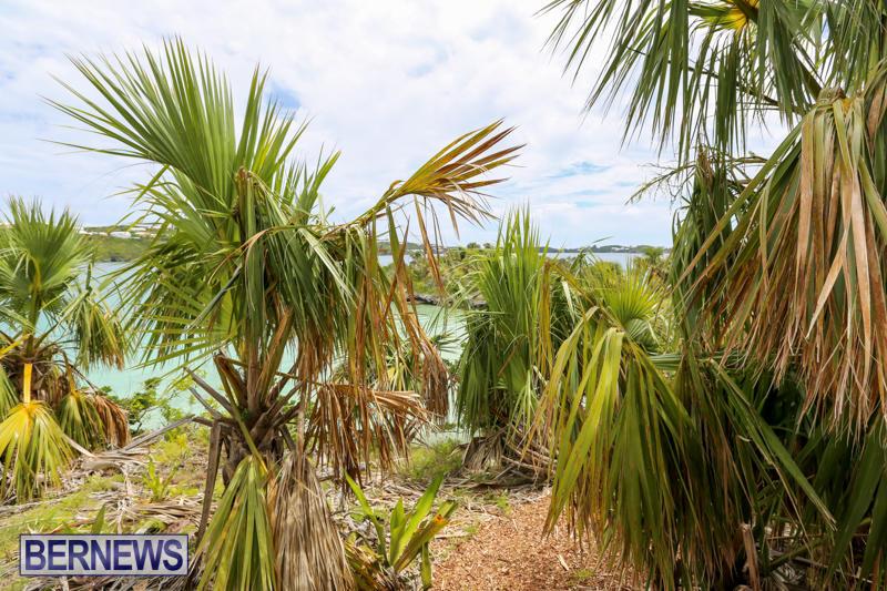 Trunk-Island-Bermuda-June-16-2015-17