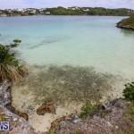 Trunk Island Bermuda, June 16 2015-20