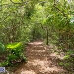 Trunk Island Bermuda, June 16 2015-25