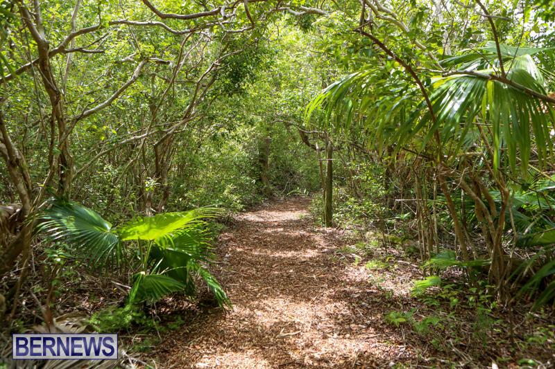 Trunk-Island-Bermuda-June-16-2015-25