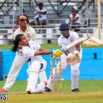 Colts Cup Match Bermuda, July 26 2015-41