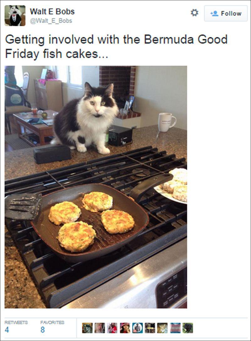 bermuda cat tweets july 2015 (2)