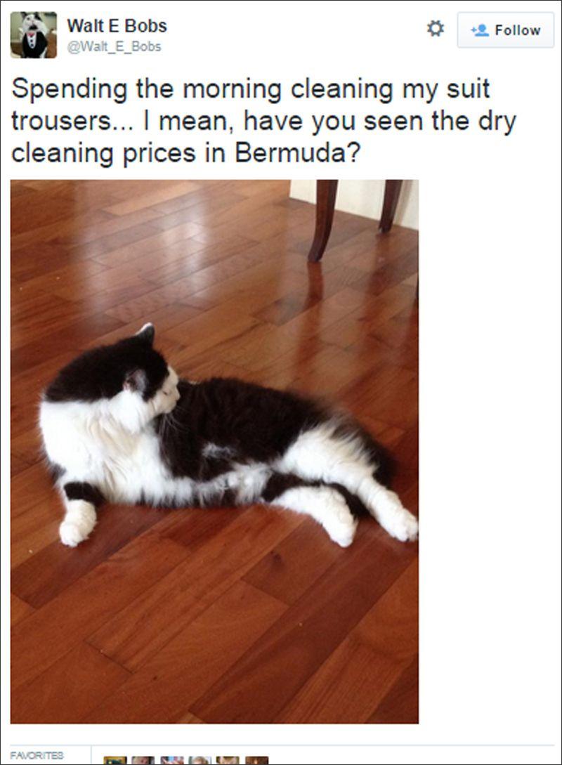 bermuda cat tweets july 2015 (4)