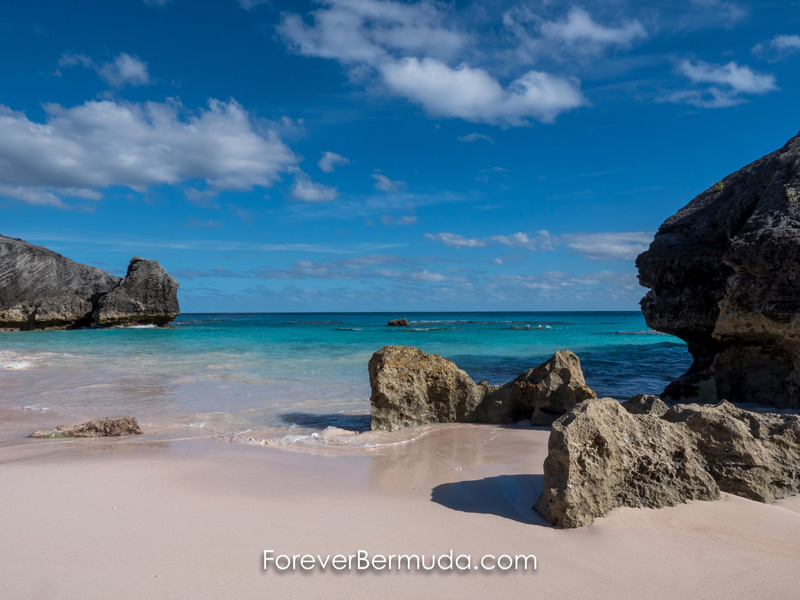ForB Best Happy Hump Day Bermuda Generic August 2015