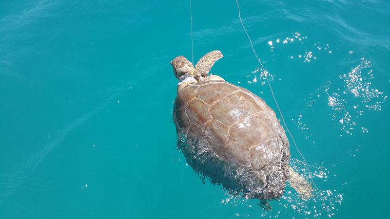 Turtle August 16 2015