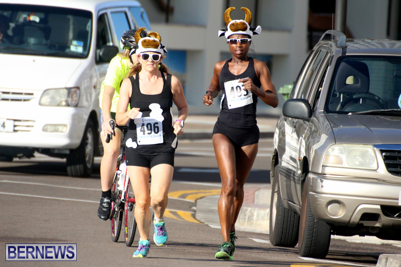 Running-of-the-Bulls-Bermuda-September-2015-18