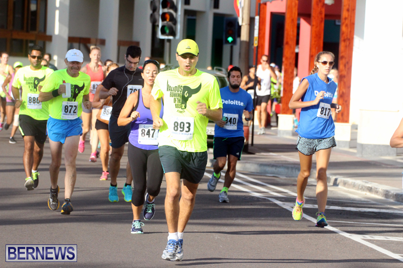 Running-of-the-Bulls-Bermuda-September-2015-4