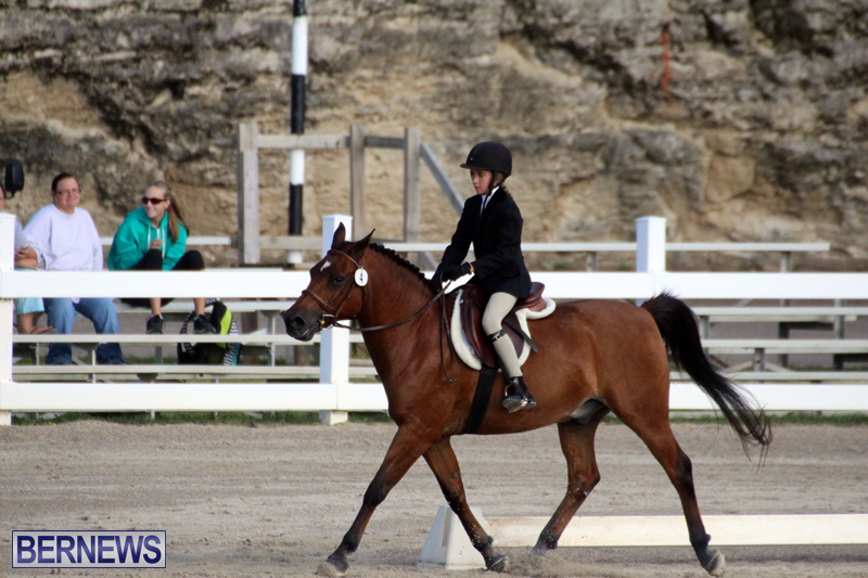 Bermuda-Dressage-Show-October-3-2015-1