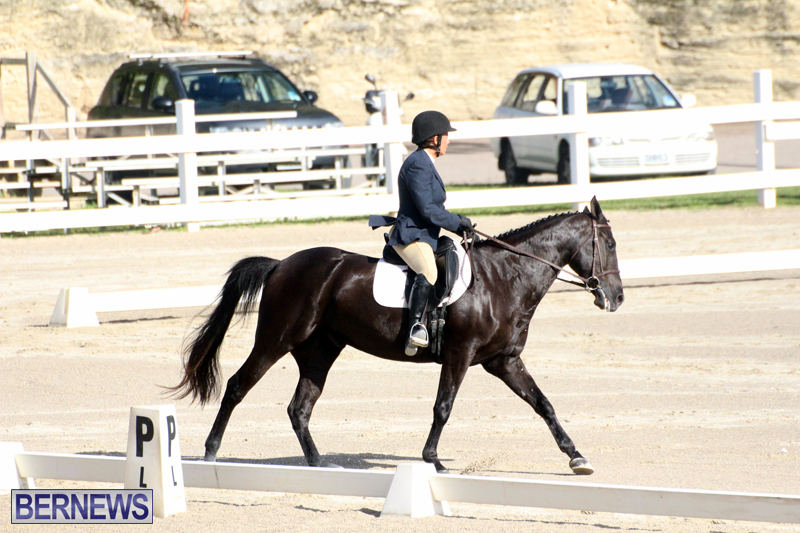 Bermuda-Dressage-Show-October-3-2015-11
