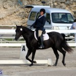 Bermuda Dressage Show October 3 2015 (12)