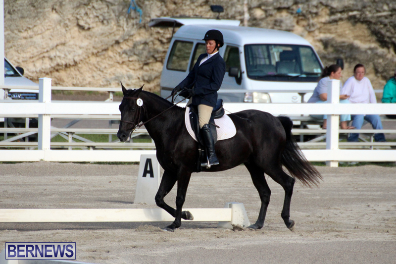 Bermuda-Dressage-Show-October-3-2015-12