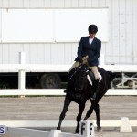 Bermuda Dressage Show October 3 2015 (13)