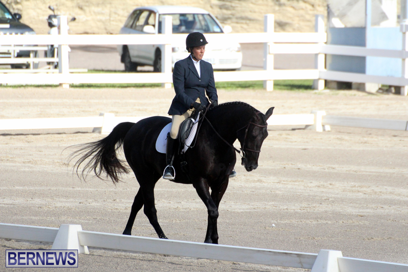 Bermuda-Dressage-Show-October-3-2015-14