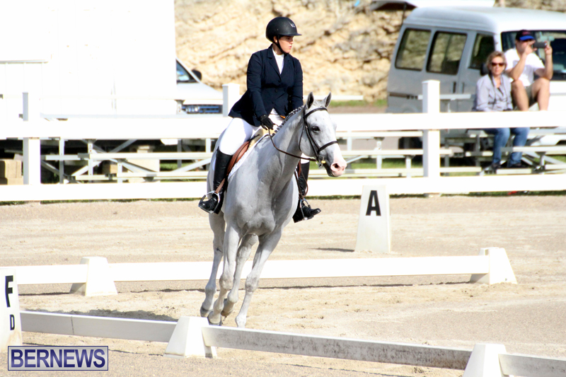 Bermuda-Dressage-Show-October-3-2015-17