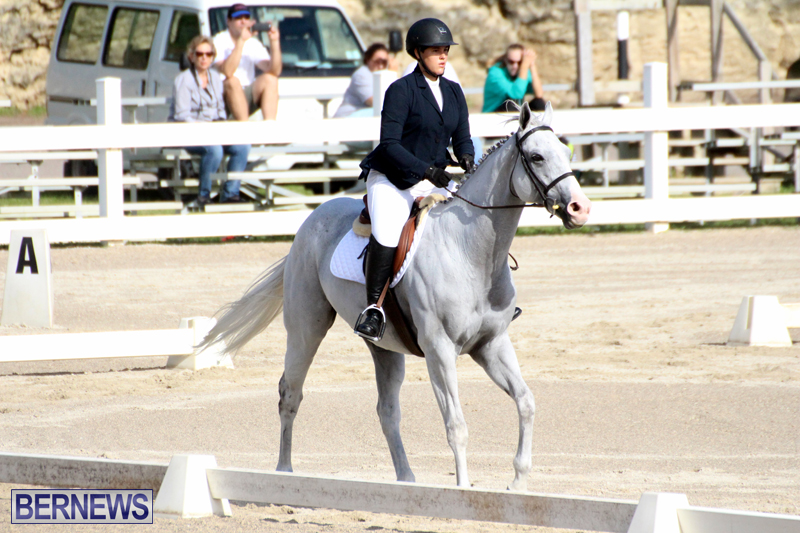 Bermuda-Dressage-Show-October-3-2015-19