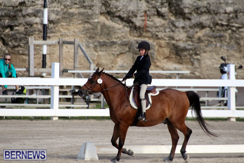 Bermuda-Dressage-Show-October-3-2015-2