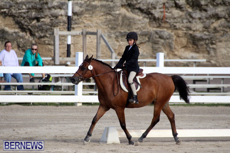 Bermuda-Dressage-Show-October-3-2015-3