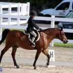 Bermuda Dressage Show October 3 2015 (7)
