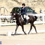 Bermuda Dressage Show October 3 2015 (8)