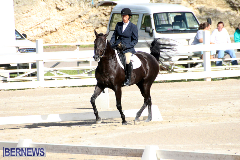 Bermuda-Dressage-Show-October-3-2015-9
