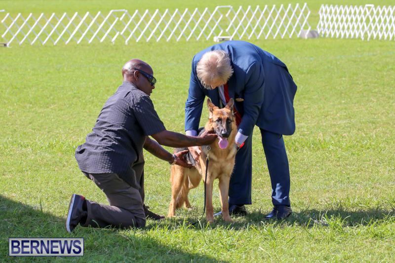 Dog-Show-Bermuda-October-24-2015-18