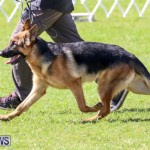 Dog Show Bermuda, October 24 2015-25