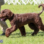 Dog Show Bermuda, October 24 2015-27