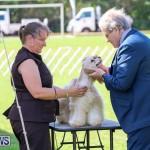 Dog Show Bermuda, October 24 2015-28