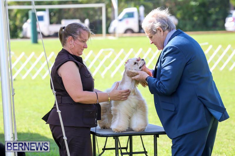 Dog-Show-Bermuda-October-24-2015-28