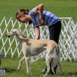 Dog Show Bermuda, October 24 2015-3