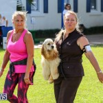 Dog Show Bermuda, October 24 2015-33