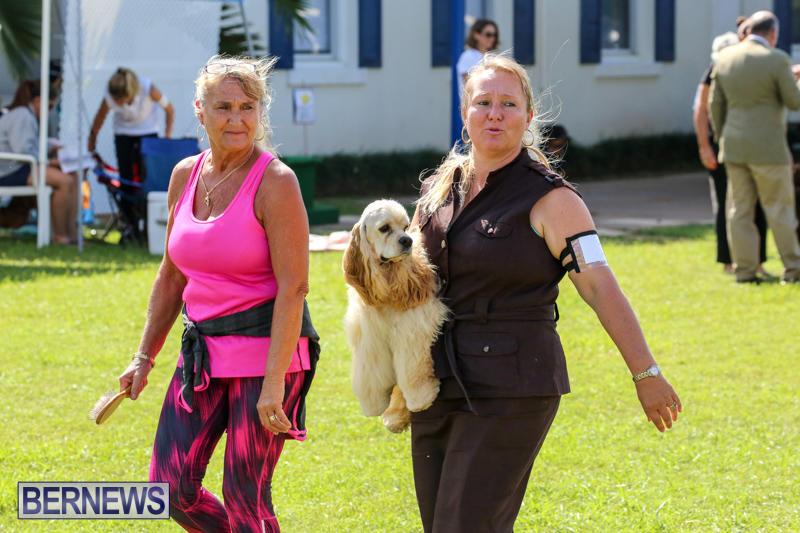 Dog-Show-Bermuda-October-24-2015-33