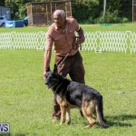 Dog Show Bermuda, October 24 2015-37