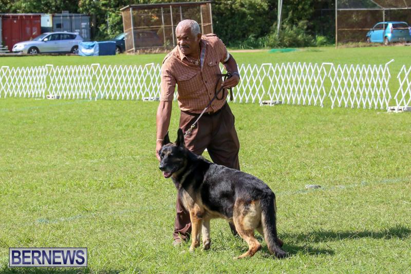 Dog-Show-Bermuda-October-24-2015-37