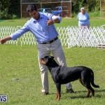 Dog Show Bermuda, October 24 2015-40